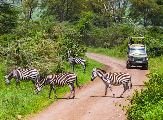 Travel, holidays, itinerary, safari