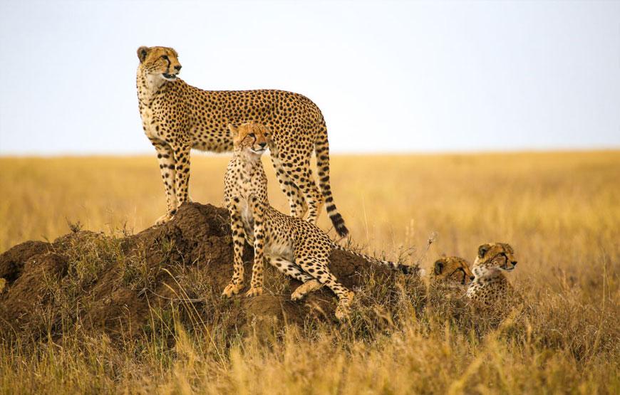 Day 2: Lake Eyasi – Serengeti National park